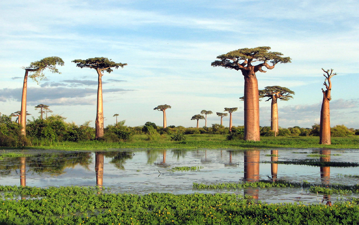 Adansonia Group