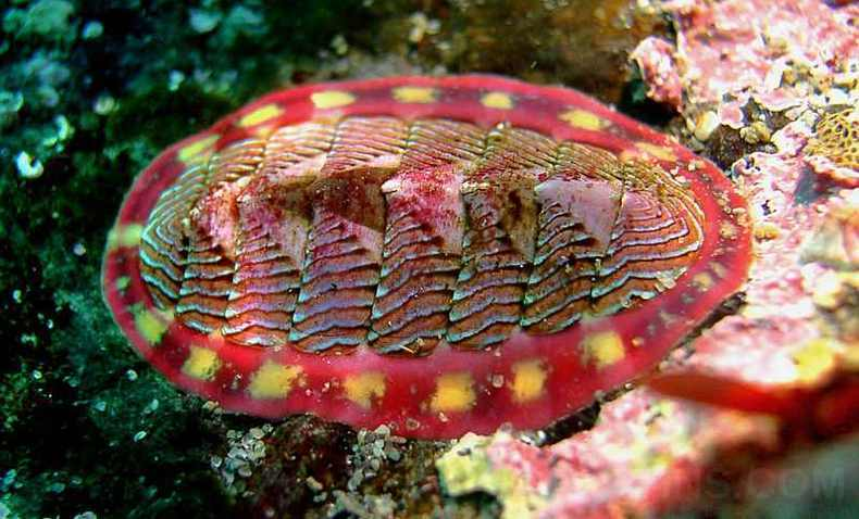 GreatBarrierReef_mollusca