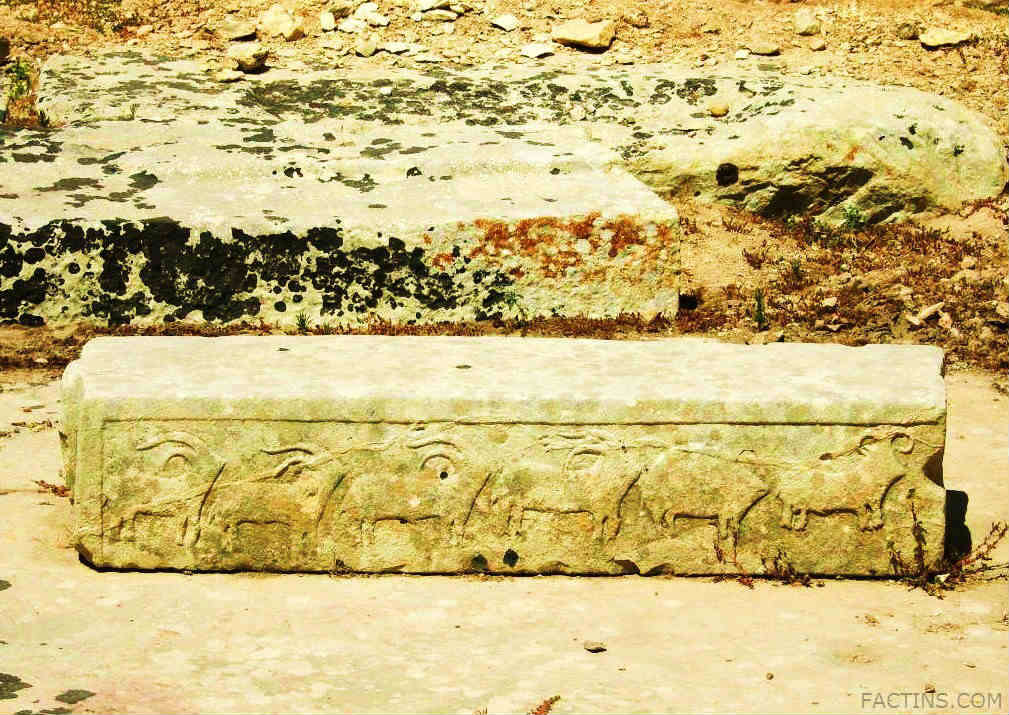 Tarxien Temples - Domestic animals -carved in Relief