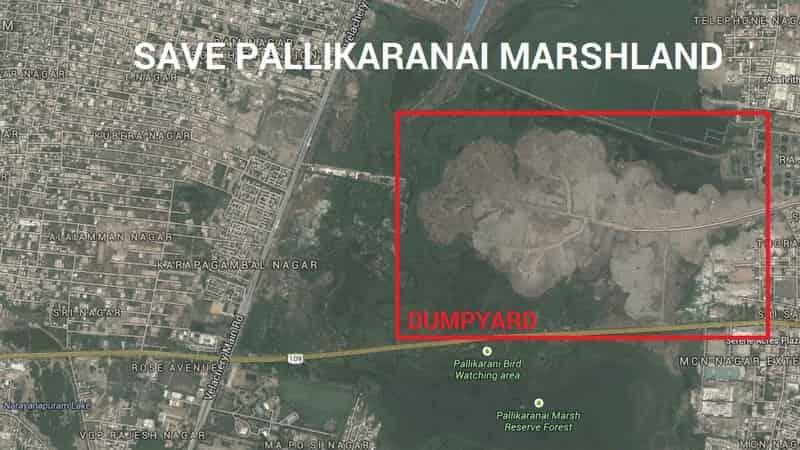 Importance Of Pallikaranai Marshland Ecosystem Factins