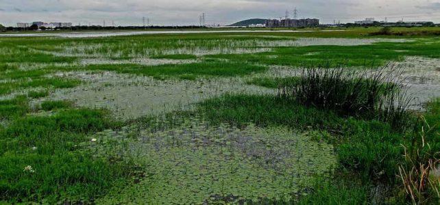 Importance of pallikaranai marshland ecosystem
