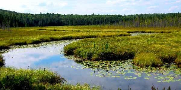 Benefit of marsh ecosystem to environment