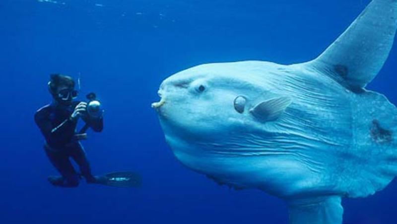 Top Largest Sea Creatures Ever Known On Earth Factins - Largest ocean
