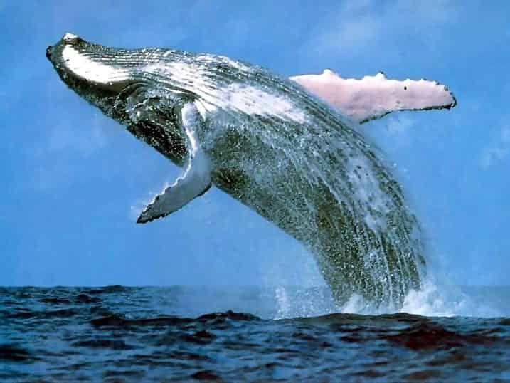 17-amazing-facts-biggest-mammal-earth