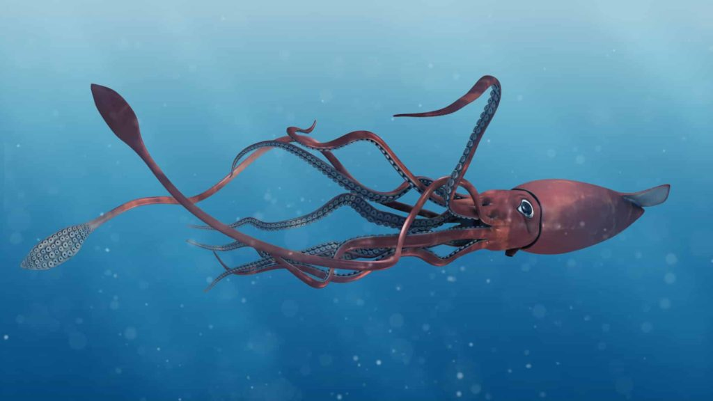 Giant Squid - interesting facts giant squid - Factins