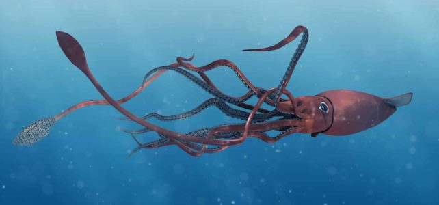 28 interesting facts about Giant Squids