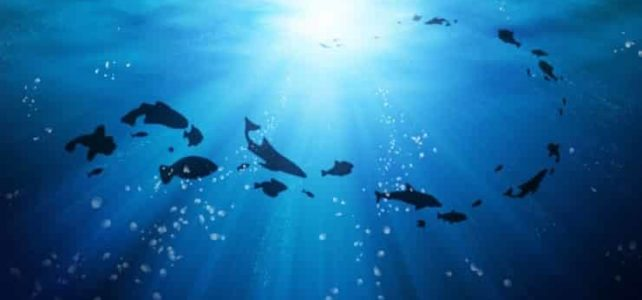 45 Interesting facts about the ocean ecosystem (Part 3 – 4)