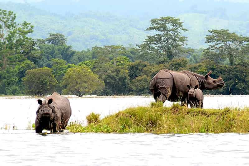 Kaziranga National Park - UNESCO Heritage Place in India - Factins