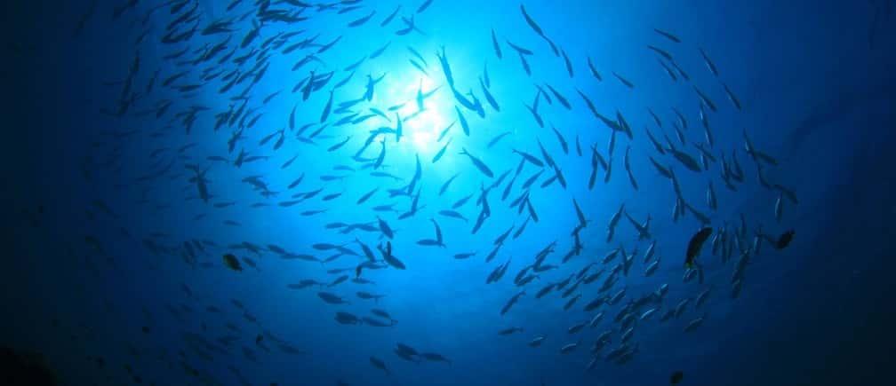 Exploring Ocean - Factins