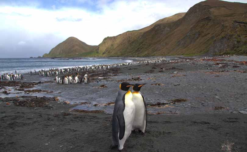 mo_sandy_bay_macquarie_island_810x500