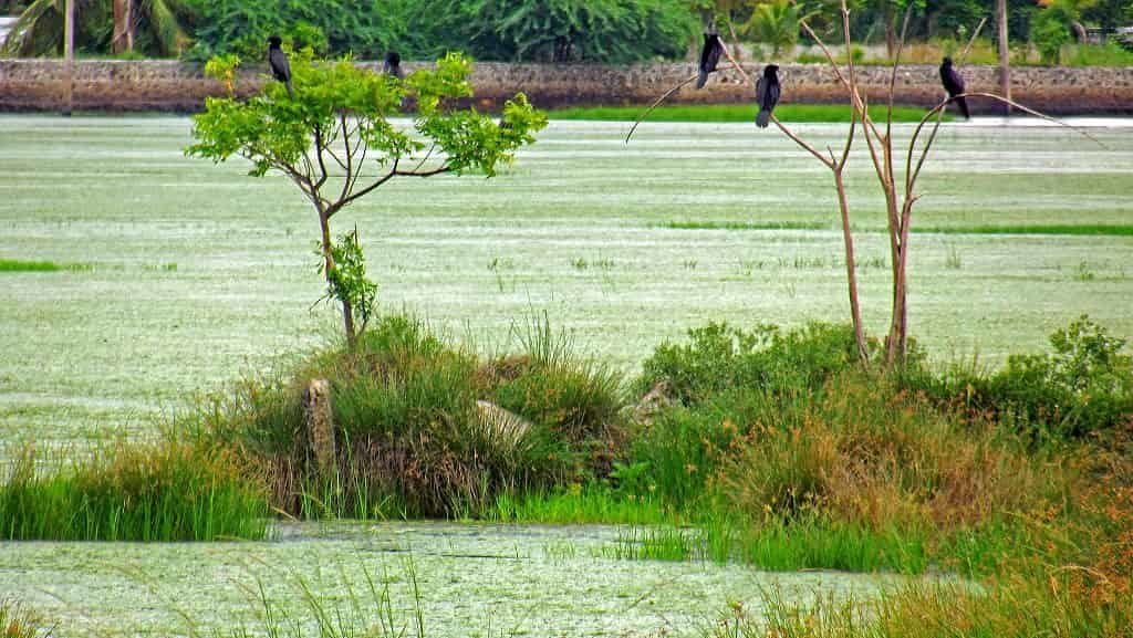 Pallikaranai Marshland - Best Tourist Places in tamilnadu - Factins