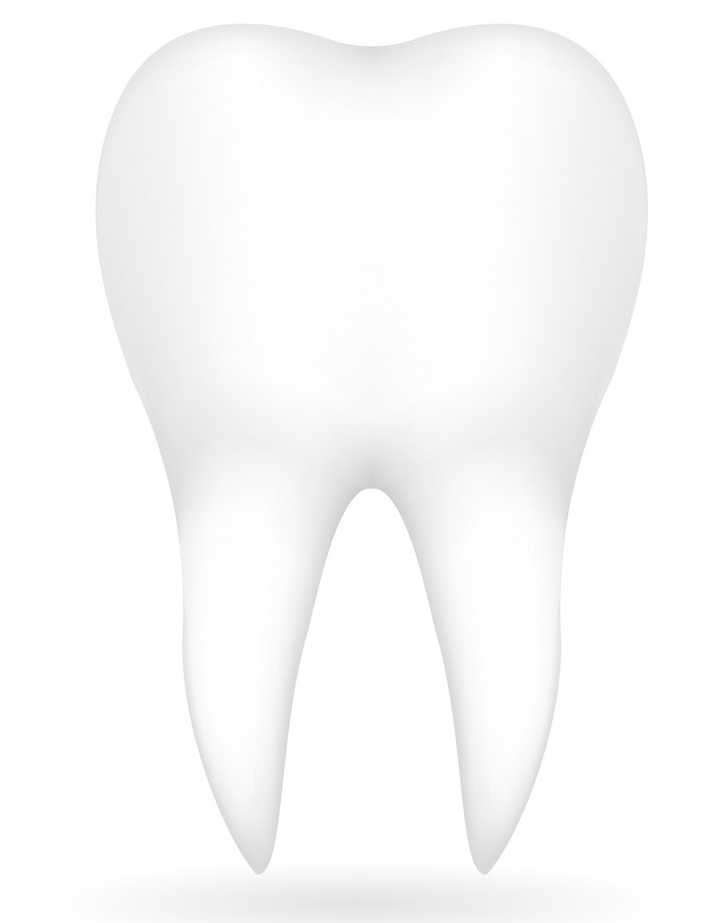 interesting facts about teeth - Tooth facts - Factins
