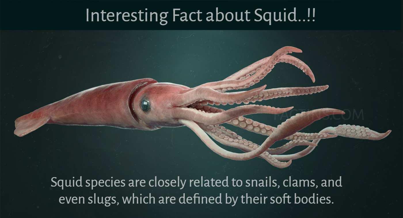 giant_squid_facts-1 - Factins